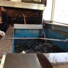 Al Mahar Fish