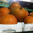 Al Rabee for Fruits & Vegetables