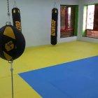 Wasp Sting Gym