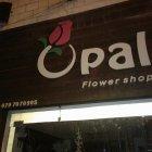 أزهار أوبال