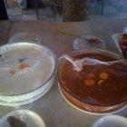 مطعم عصا موسى