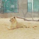 Ghamadan Zoo