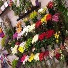 Happy Day Flowers
