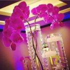 Tuffaha Flowers