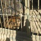 حديقة الأردن للحيوان