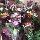 أزهار بيرلا