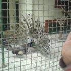حديقة الامير هاشم للطيور