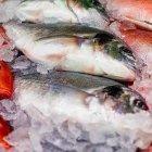المبرور وقدورة للأسماك الطازجة