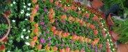 المشتل منظم وفيه الزهور مرتبة