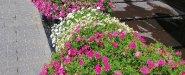 زهور ونباتات عند مدخل الفندق