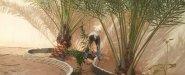 -زراعة النخيل والتيل والورود(داخلية وخارجية) -الديكورات بانواعها(شلالات,نوافير,احواض) رش المنازل من الحشرات -شبكات الرى 0553268634