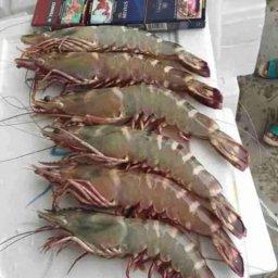 Abu Saif Fresh Fish Restaurant