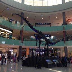 Dubai Dino! A dinosaur fossil displayed at Dubai Mall :)