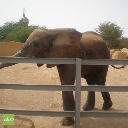 صور حديقة حيوانات الرياض الرياض