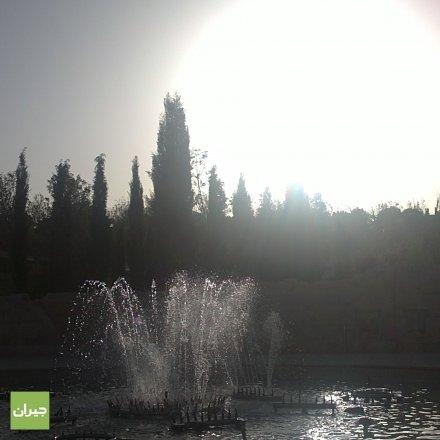 منظر للشمس من خلال شجيرات الحدائق