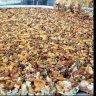Oriental sweets  :: حلويات السهل الأخضر