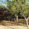 من داخل الحديقة :: حديقة زهران