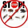مكافحة الحشرات والقوارض :: مؤسسة الأمناء