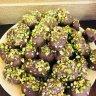 رمضان راحل...و العيد داخل...تقبل الله منا و منكم ، رمضان و العيد ما بيحلوا غير مع شوكولاتة لاروش !  :: لا روش للشوكولاته