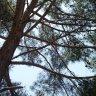 Landscaping  :: منتزه عمان القومي